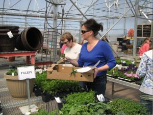 Women shopping for plants and flowers for thier homes and gardens looking at the fillers available at Tree Top Nursery