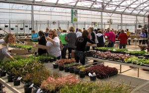 Many people shopping for different flowers and plants for their gardens and homes at tree top Nursery in central Minnesota